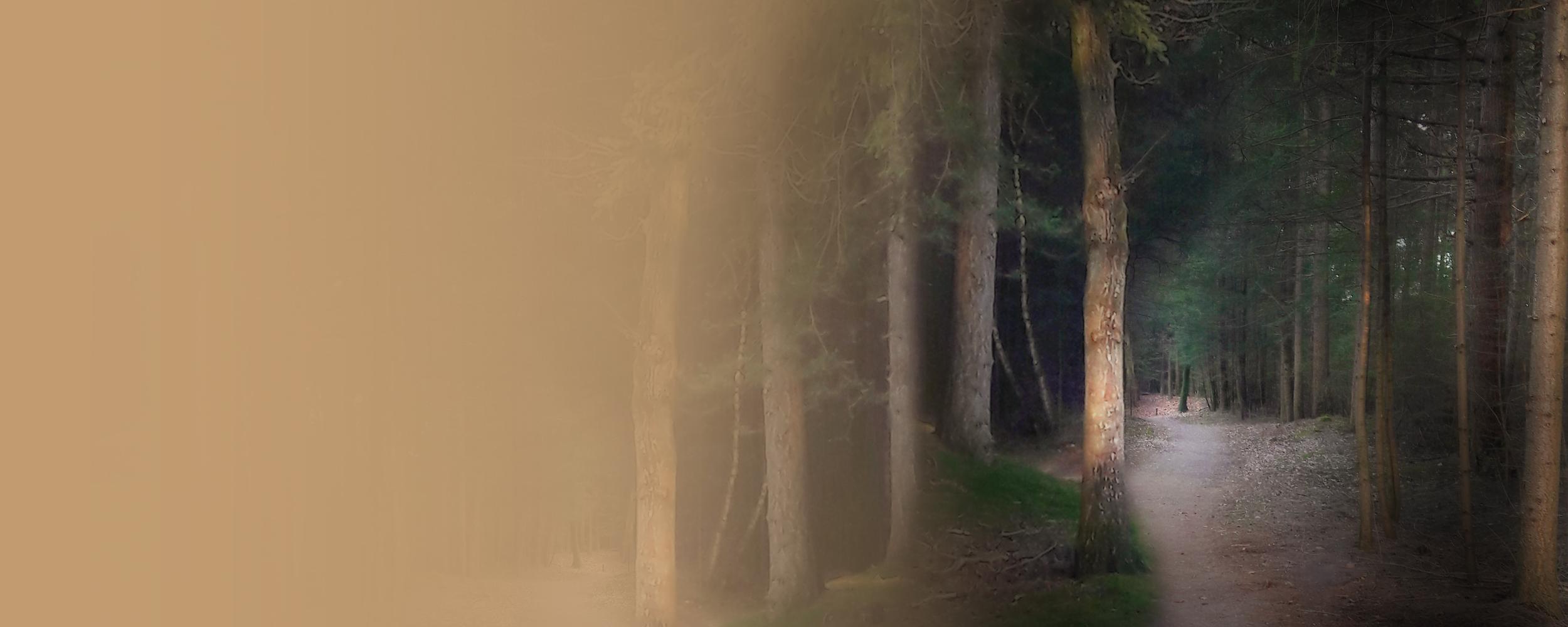 De geheimen van het sprookjesbos